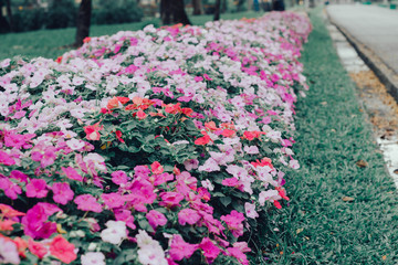 Flowers in the Winter Park of Asia,  Vintage Concept, Vintage Tone,