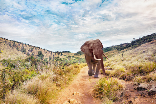 Big elephant in a landscape