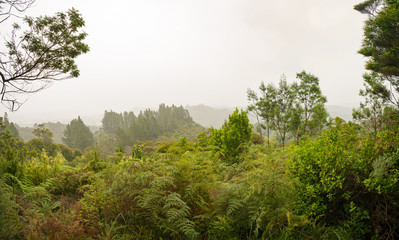 Fog in the jungle panorama