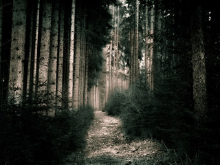 Well lit hidden forest path in high-contrast