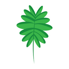 green branch palm leaves frond natural vector illustration