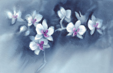 White orchid flowers on the dark blue background watercolor