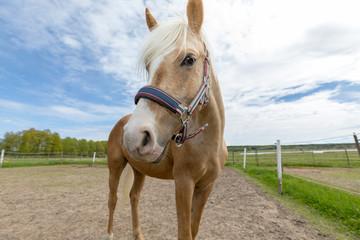 Poster - Beautyful horse