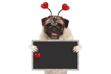 happy smiling Valentine's day pug puppy dog with hearts diadem and blank blackboard sign in paws, isolated on white background