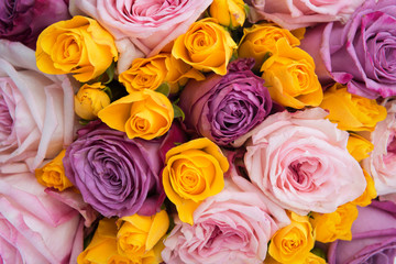 Colorful fresh roses background
