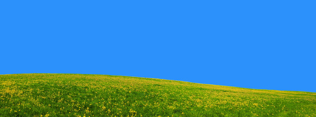 Panorama of flower hill. Flowers meadow against the blue sky. Summer landscape soothing and peaceful.