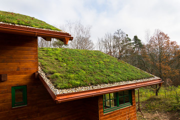 Wooden house with extensive green living roof covered with vegetation