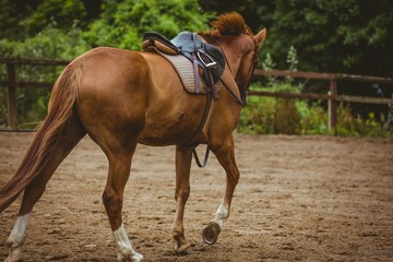 View of horse cantering