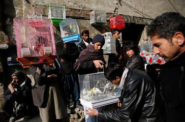 The Wider Image: Wings of joy: Kabul's bird market