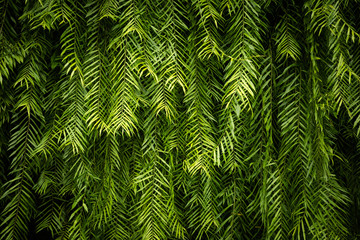Green Leaf wall background and texture Wall mural