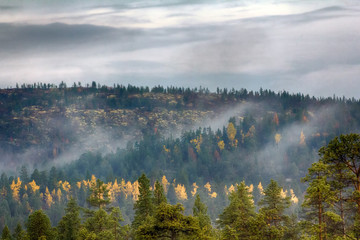 Morning fog creeps with scraps over autumn mountain forest