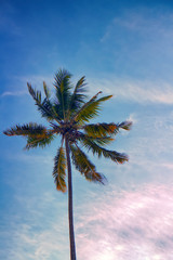 Coconut tree with tousled crown