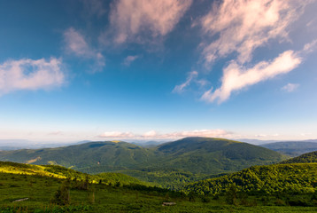 beautiful summer landscape in mountains. forested grassy slopes under the deep blue sky with some clouds