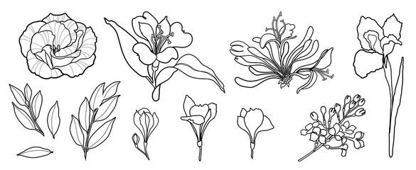 Hand draw line vector flowers set. Peony, rose, iris, alstromeria, lilac. Logo design.