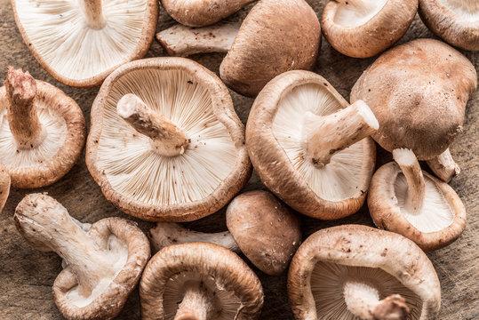 Shiitake mushrooms. Macro. Food background.