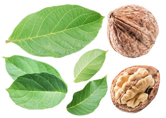 Walnuts and walnut leaves. Isolated on white background.