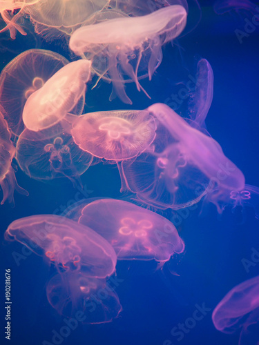 "transparent jellyfish floating in the water"" stock photo and, Presentation templates"