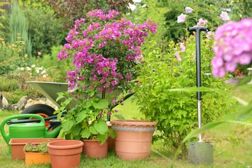 Garten 769