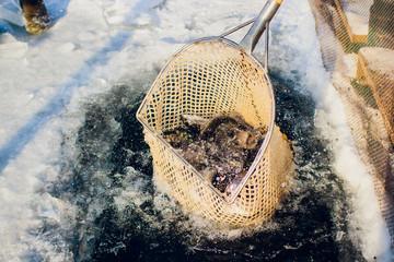 farm trout winter ice-hole fish lake catching a mace