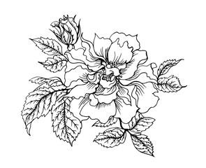 Rose floribunda, black and white graphic drawing.