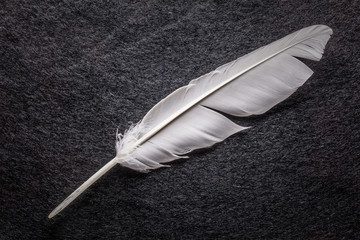 White feather on black table
