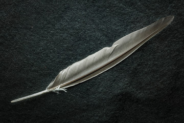 Grey feather on black table