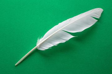 White feather macto texture on freen table