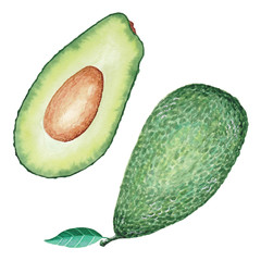 Ripe tasty avocado sectional view. Watercolour illustration. Hand-painted fruit