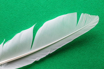 White feather macto texture on green table