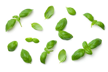 Basil Leaves Isolated on White Background Wall mural