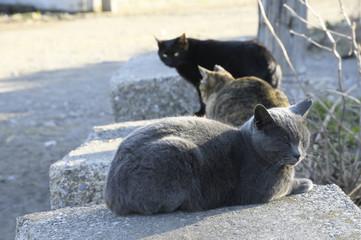 横須賀の漁港の地域猫たち