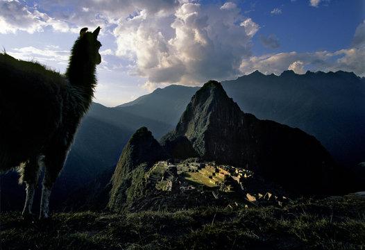 Machu Picchu with Llama