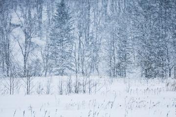 Winter forest in Hokkaido, Japan