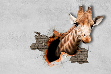 Giraffe pokes his head out of the wall. Wall murals. 3D rendering.