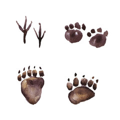 Animal Footprint Track, Watercolor painting