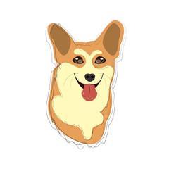 Illustration of corgi dog breed. Smiling face of corgi.