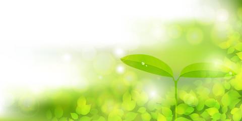 新緑 エコ 葉 背景