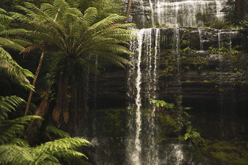 Beautiful Russell Falls in Mount Field National Park, Tasmania, Australia.