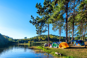 Camping tents under pine trees with sunlight at Pang Ung lake, Mae Hong Son in Thailand.