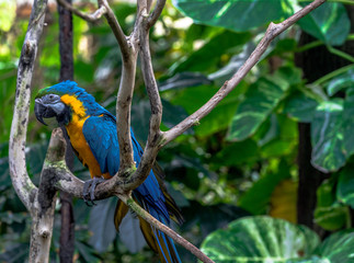 Bright Yellow and Blue Plumage on a Macaw Perched on a Branch