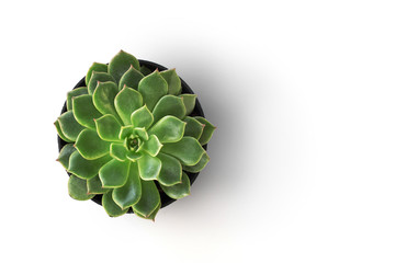 top view cactus plant in pot isolate on white background