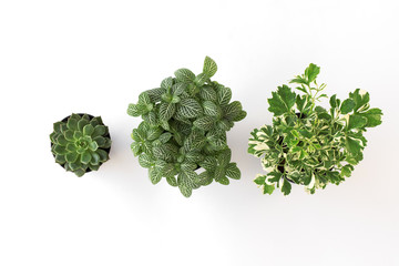 top view set green plant in pot isolate on white background