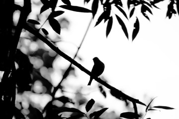 Silhouette abstract lonely bird perched on tree branch