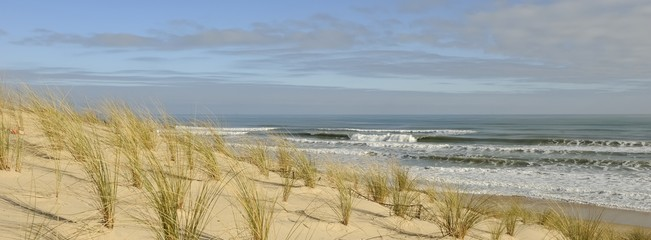 ocean i wydma