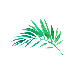 Green areca palm tree leaf hand drawn watercolor vector Illustration