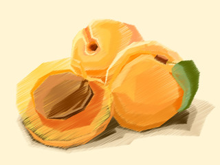 Vector illustration of drawing fruit apricot.
