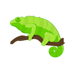 Green chameleon on branch. Vector illustration with tropical lizard