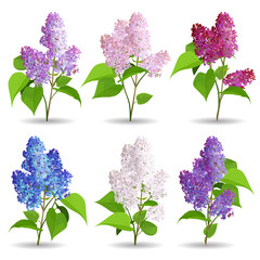 Spring Flowers. Set of Lilac Isolated on White Background.