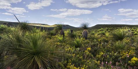 Lesueur National Park, near Jurien Bay, Western Australia, Australia