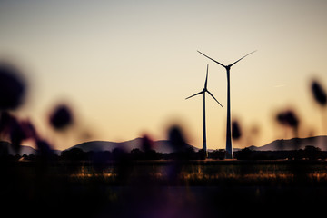 Wind Power Stations in the Evening Sun